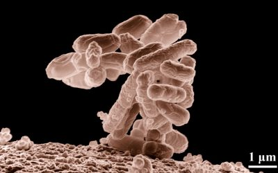 Sanofi turns to high titer E. Coli platform in AbSci deal